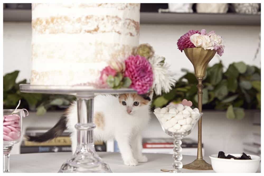 happily-cat-wedding-cake