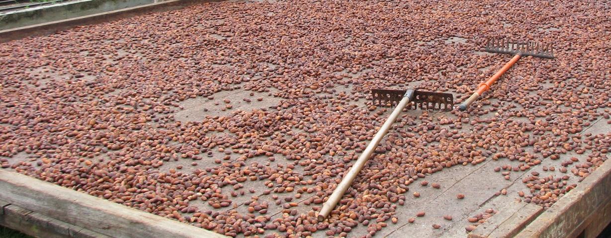 https://static1.squarespace.com/static/5866a7aa414fb5aa2b8ce15d/t/586af013d482e9282493026e/1483403373450/cocoa.jpg?format=1500w