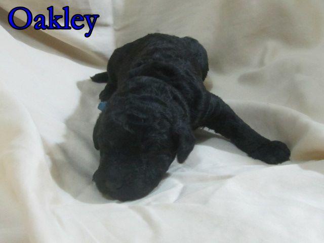 2 Oakley.JPG
