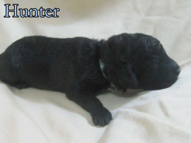 8 Hunter.JPG