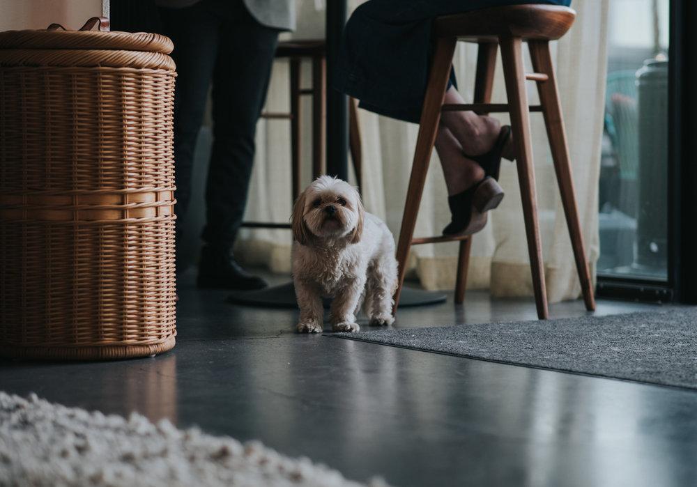 cloud room seattle dog friendly workspace