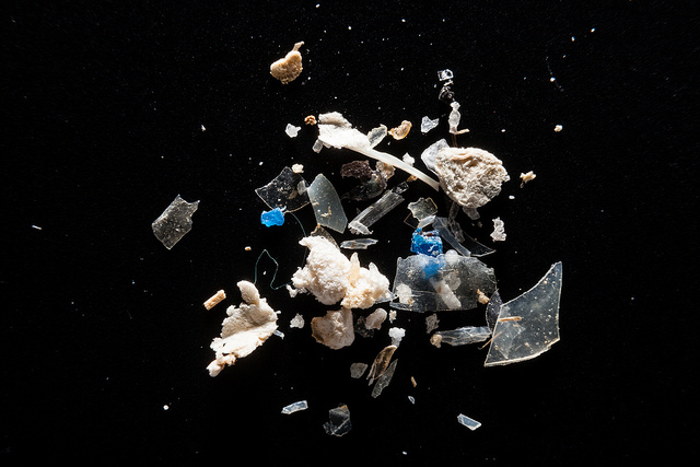 Microplastics from the Patapsco River