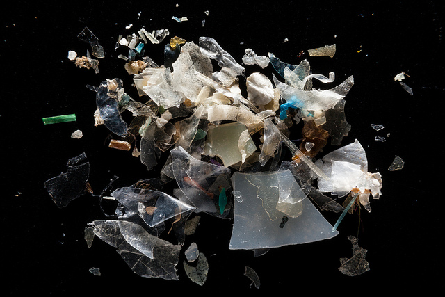 Microplastics from the Magothy River