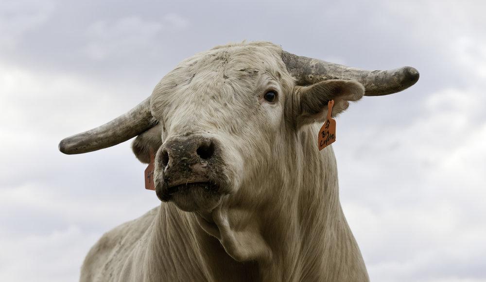 20110726_Wittke_PBR Livingston Classic_Bulls_137.JPG