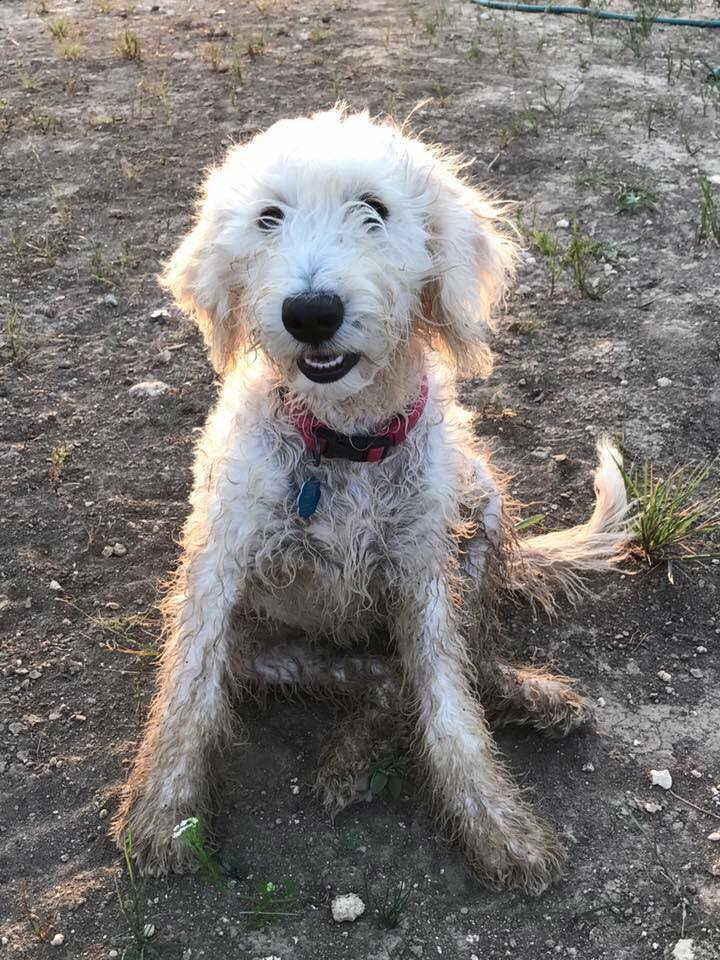 Lucy playing in the mud