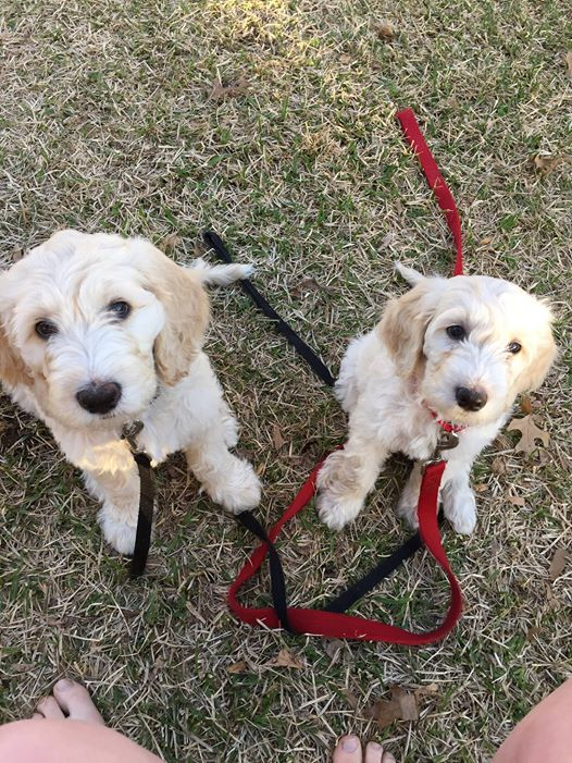 two puppies add.jpg