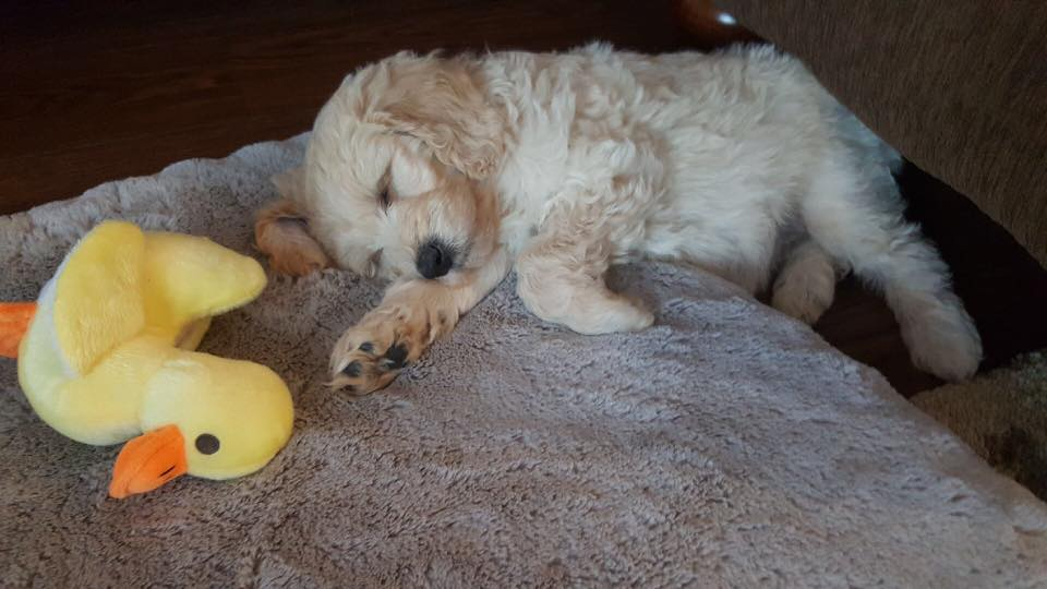 Sunny is loving her new home. sweet dreams.