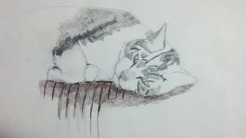 """Cat on A Hot Afternoon"", pencil, 2017, 14"" x 12"""