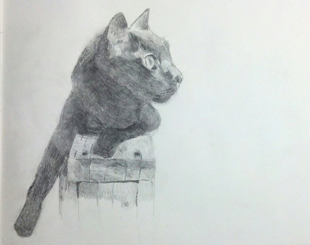 """Buzz"", pencil, 2017, 11"" x 12.5""   My beloved pet, named after Buzz Aldrin the astronaut who as he piloted the lunar lander to the surface of the moon remarked, ""Kicking up some dust"". I thought it fitting that a rambunctious cat running through unused corners of the house should have the same name."