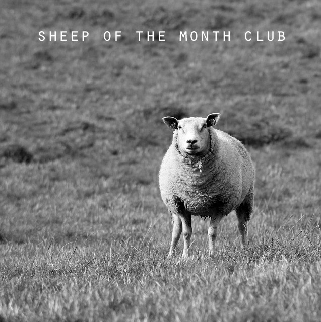 Sheep of the Month.jpg
