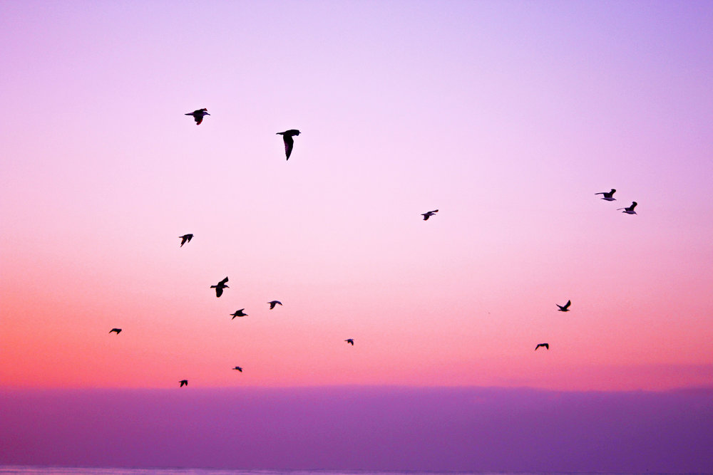 birds in the sky.jpg
