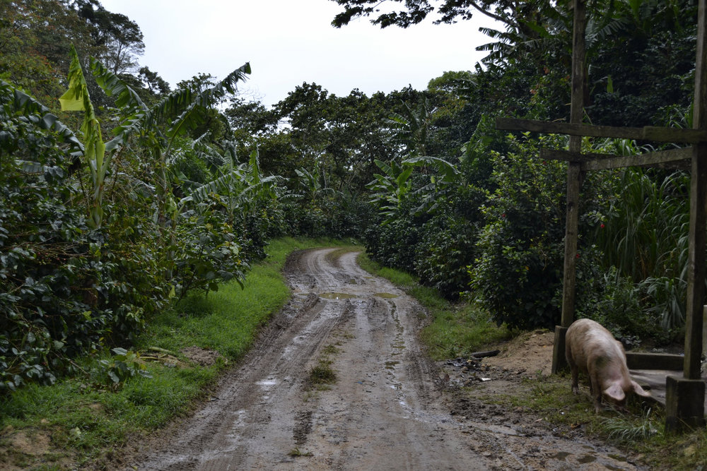 Entry Road.jpg