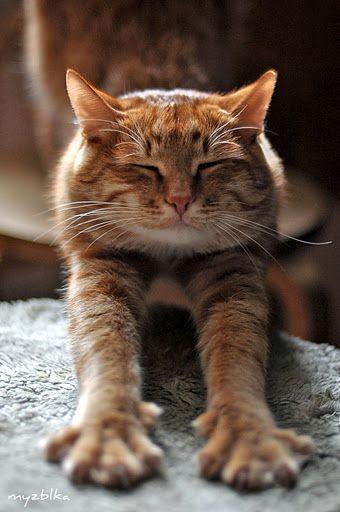 stretchcat.jpg