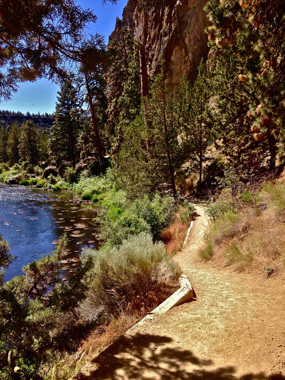 Ducks, otters, and blue heron are often spotted in the water along the River Trail at Smith Rock State Park.