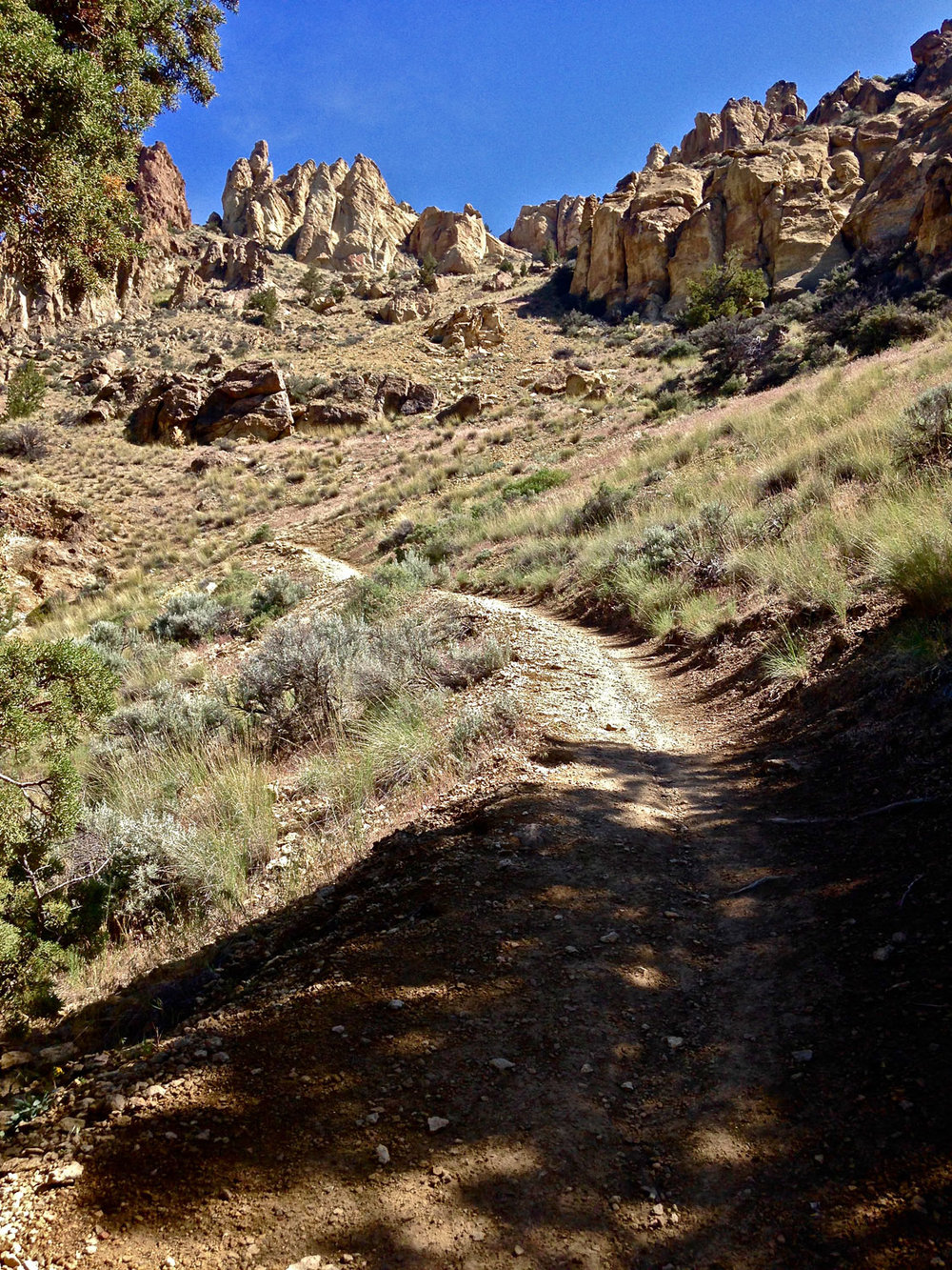 The Burma Road Trail starts off in the trees, but only briefly at Smith Rock State Park.