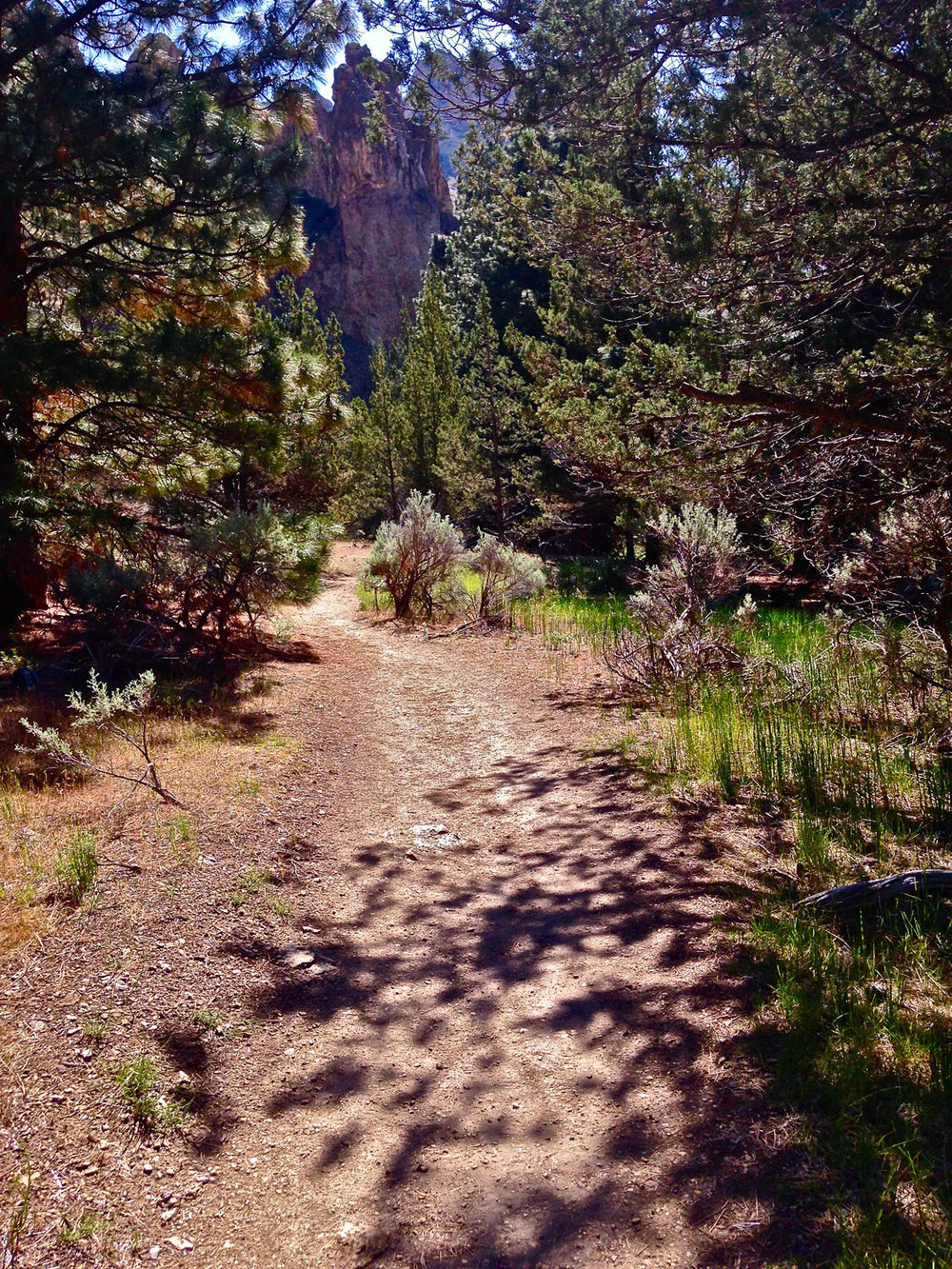 The Wolf Tree Trail goes past giant rock pinnacles on your left where golden eagles nest at Smith Rock State Park.