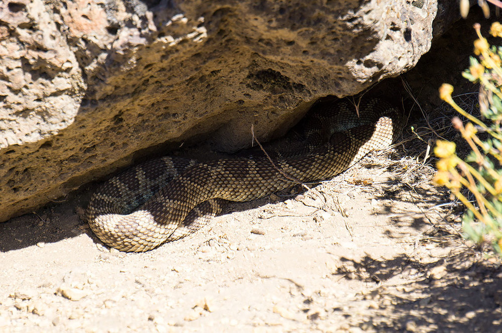 Student Wall Rattlesnake in the Gorge at Smith Rock State Park