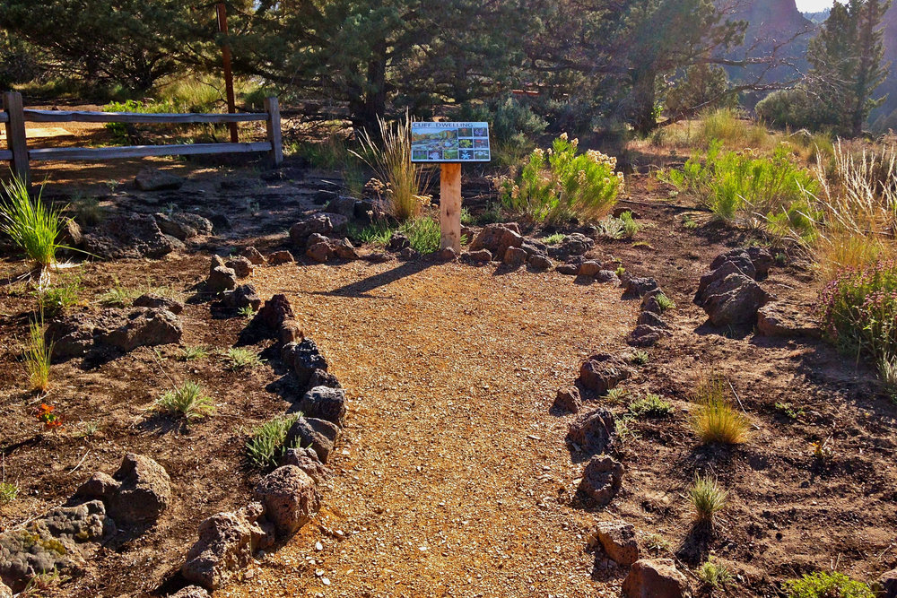 cliff dwelling plants in the Native Plant Demonstration Garden at Smith Rock State Park