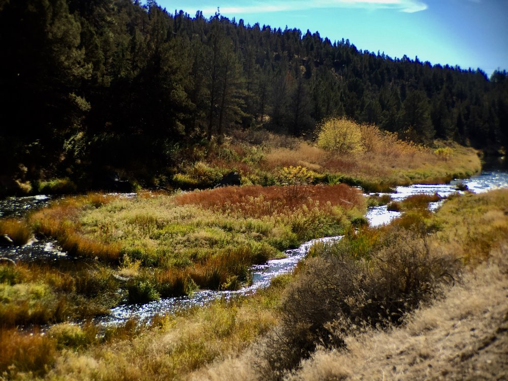 fall color along the  River Trail  at Smith Rock State Park