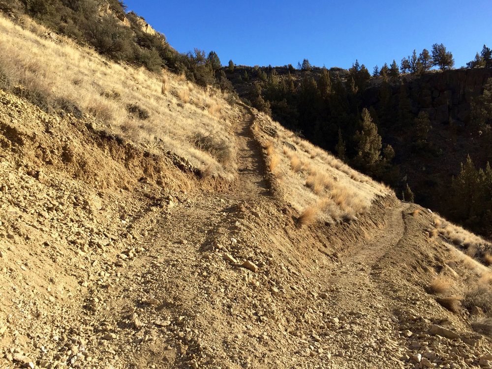 Following the switchbacks up to Burma Road on the Wolf Tree Trail.