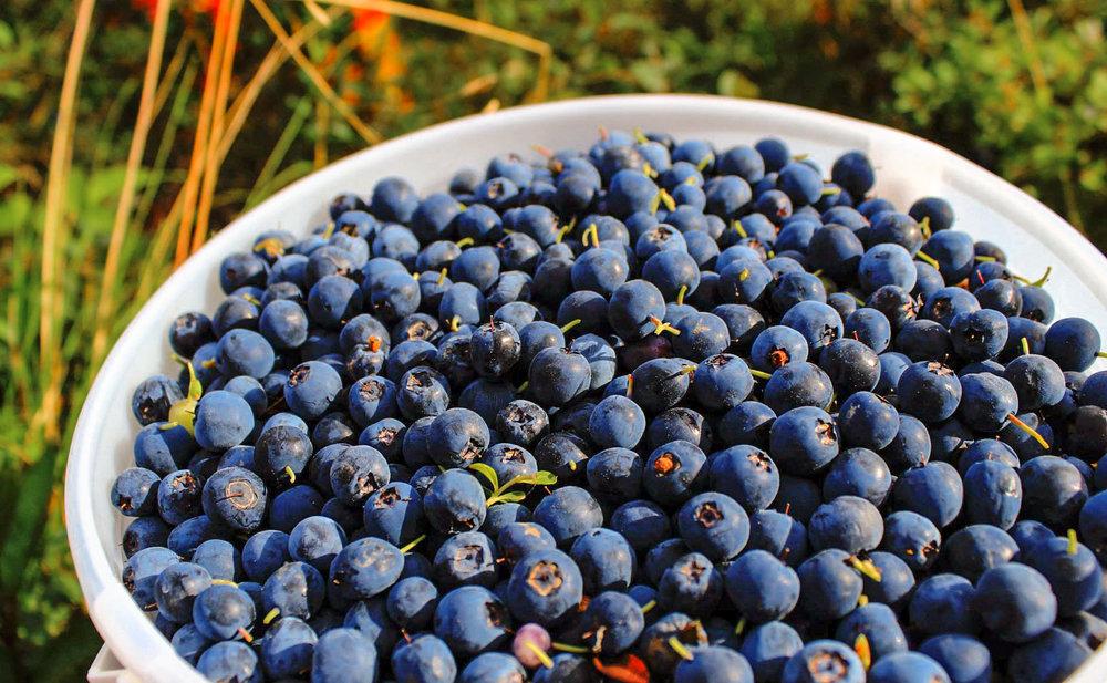 Wild Alaskan blueberries