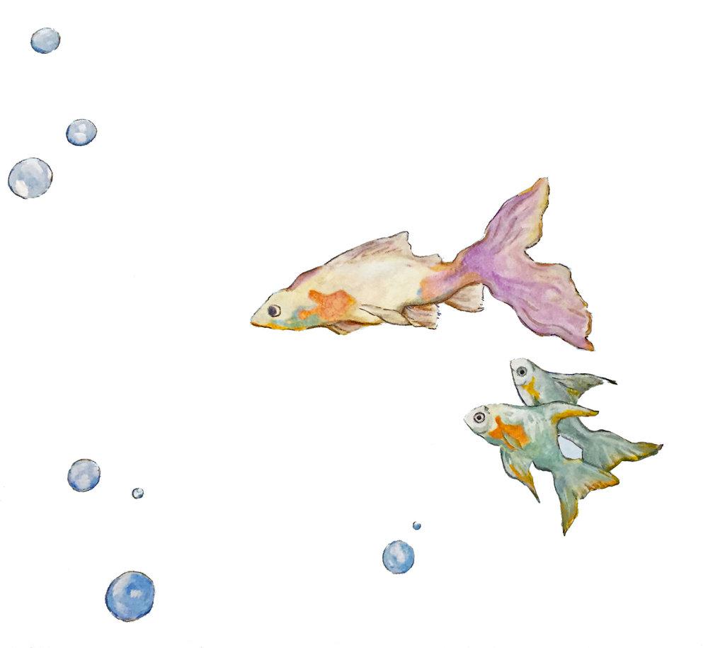 Fish1 copy2.jpg