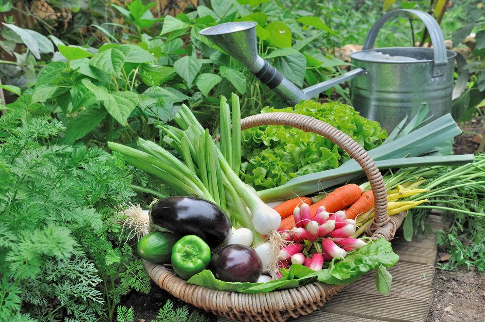 Seeding, Harvesting, Weeding, Organic Fertilizing, Raised Beds, Pest Control