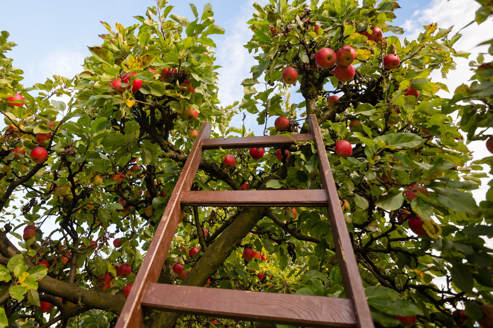 Pruning, Harvesting, Holistic Sprays, Pest Control, Planting