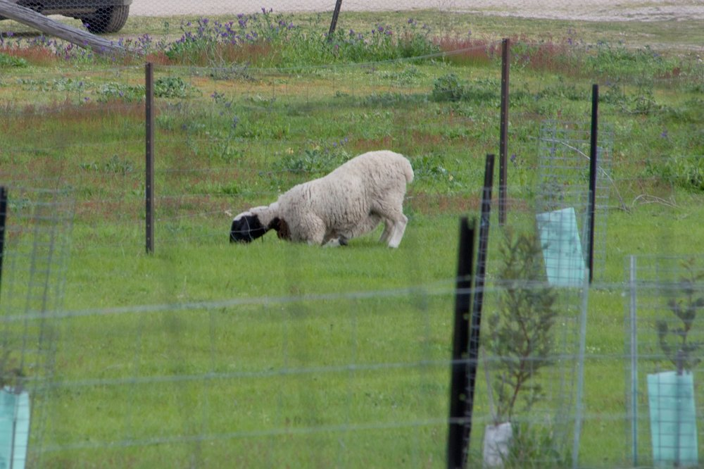 George looking for greener pasture, 7 October 2016