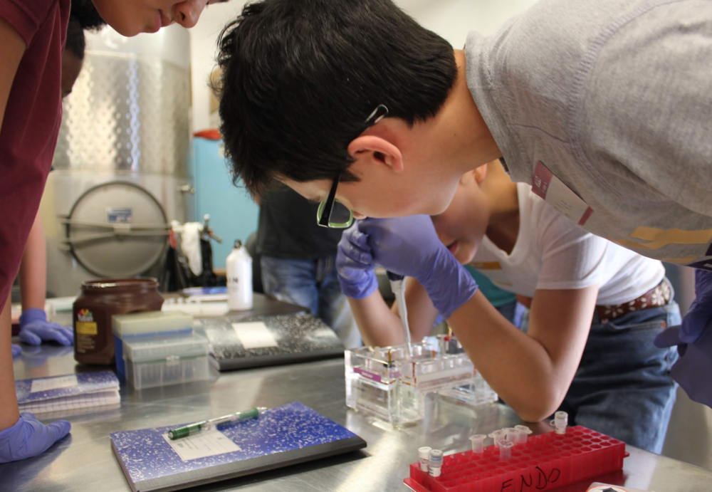 iGEM member Michael helping helping with electrophoresis of DNA.