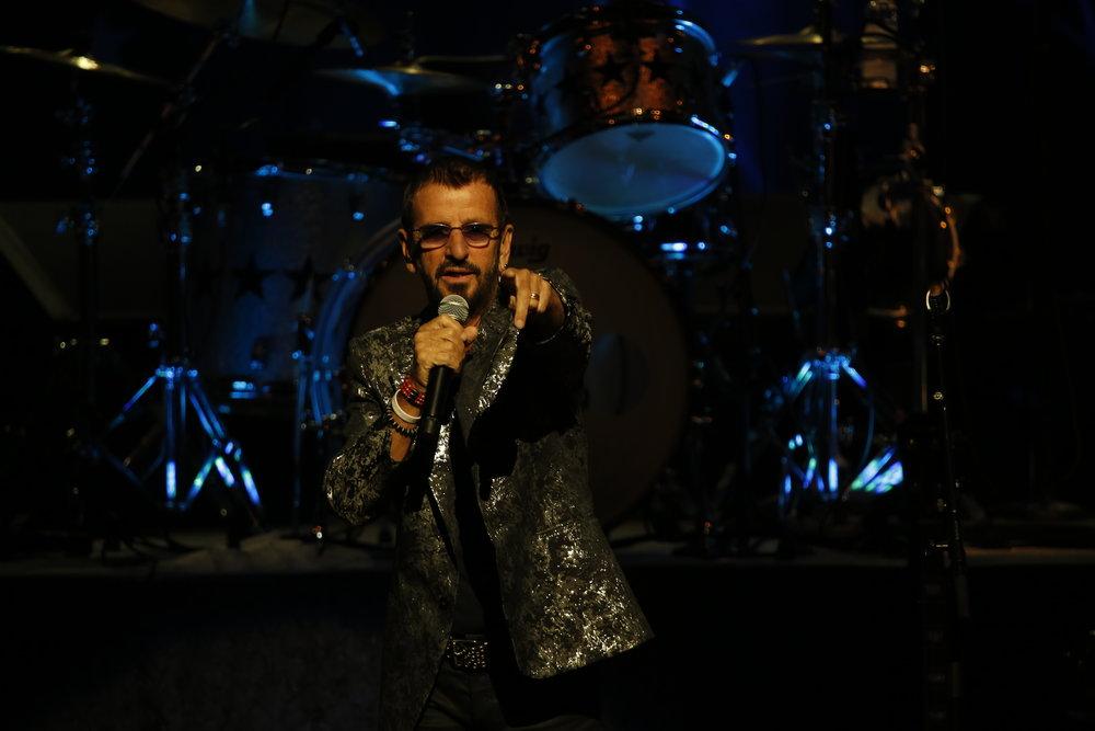 Ringo 2.JPG