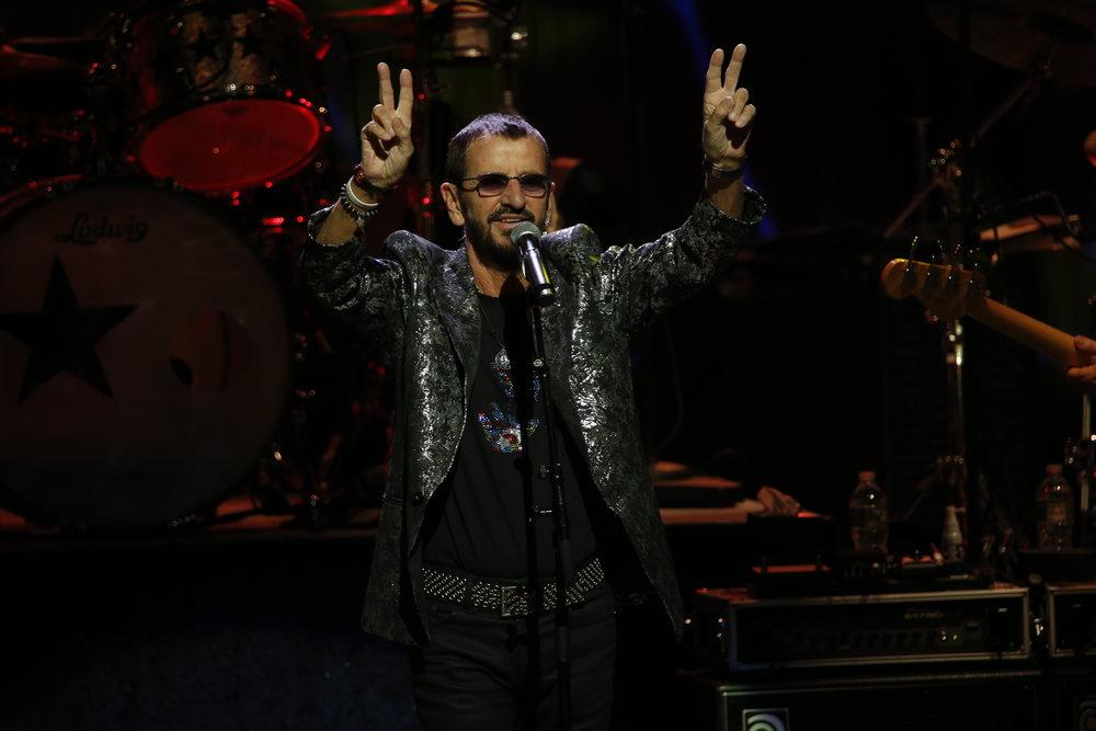 Ringo 3.JPG