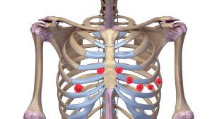 ribcage-with-ligaments-637772292_3840x2160-2.jpg