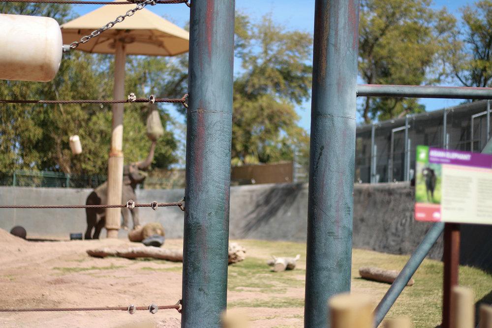 elephant at the phoenix zoo