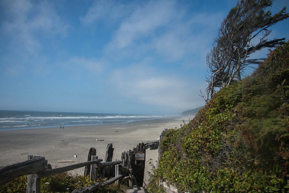 Beach 1, Olympic National Park Washington, Kalaloch Root Tree