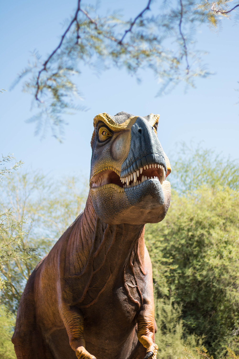 Fun Things to do in Phoenix with Toddlers