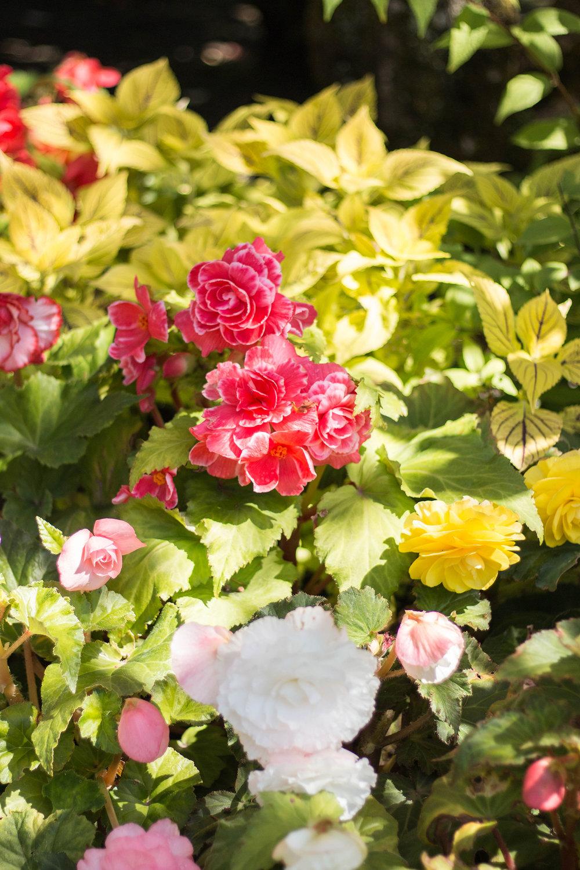 Butchart Garden Victoria BC