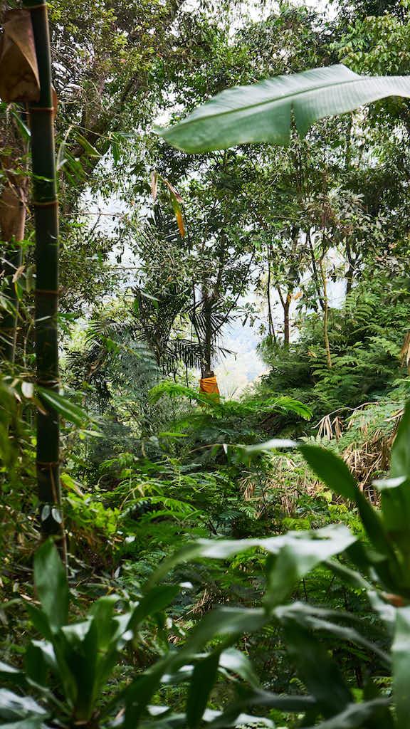 Zentral Bali - Dschungel