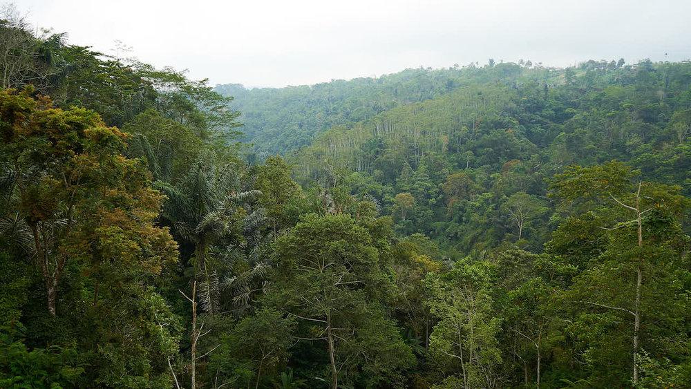 Dschungel in Zentral-Bali