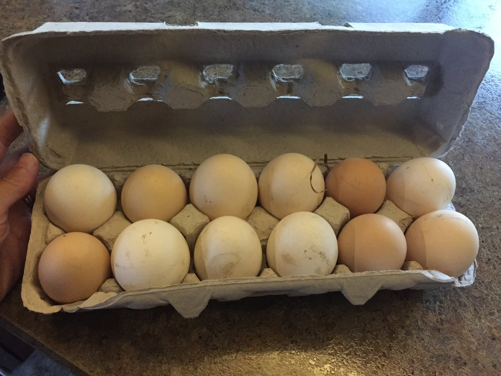 Fresh eggs anyone!?