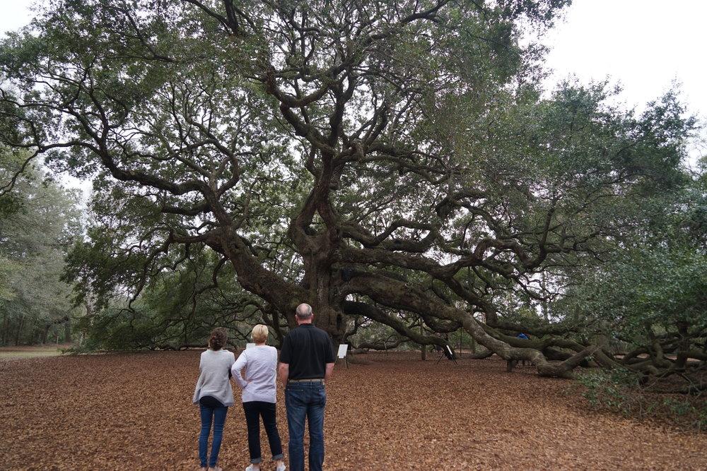 Taking in the massiveness of the Angel Oak