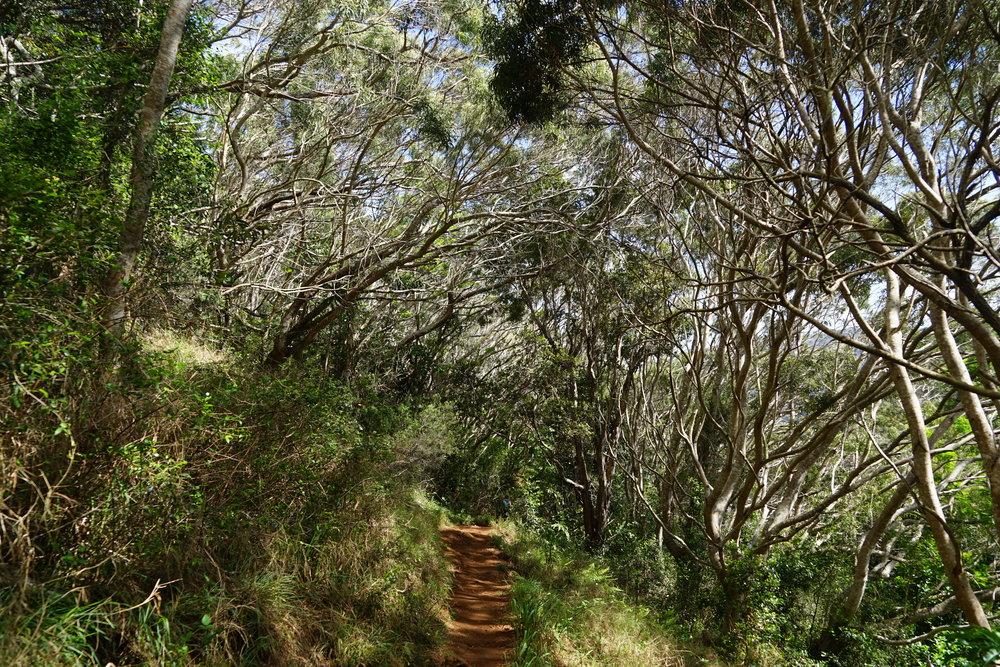 Starting our hike to Waipo'o Falls