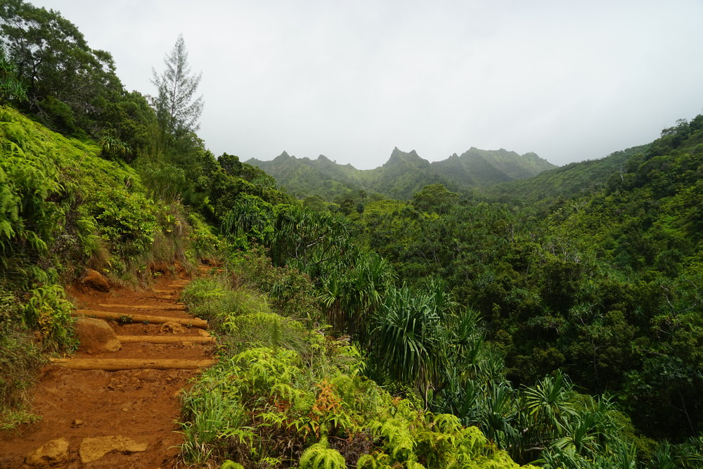 The trail takes a slight turn into the jungle