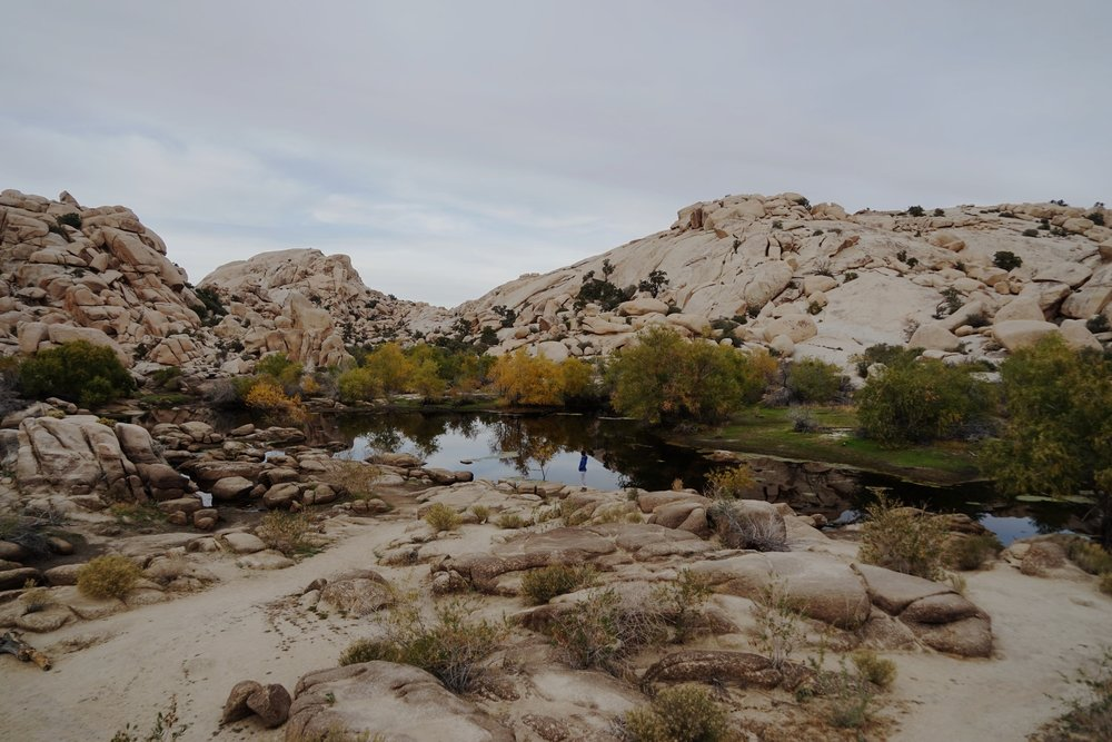 Barker Dam Joshua Tree