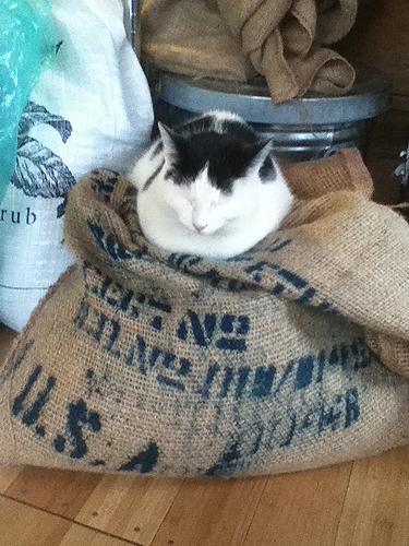 catandcoffeebag
