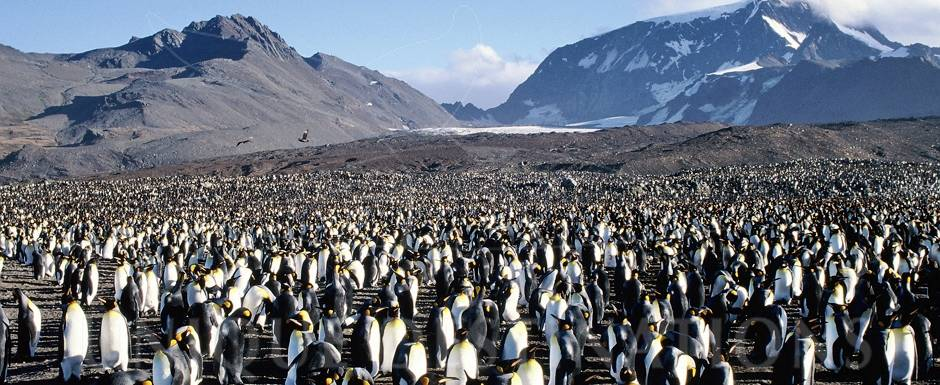 Wondermore Antarctica 3.jpg
