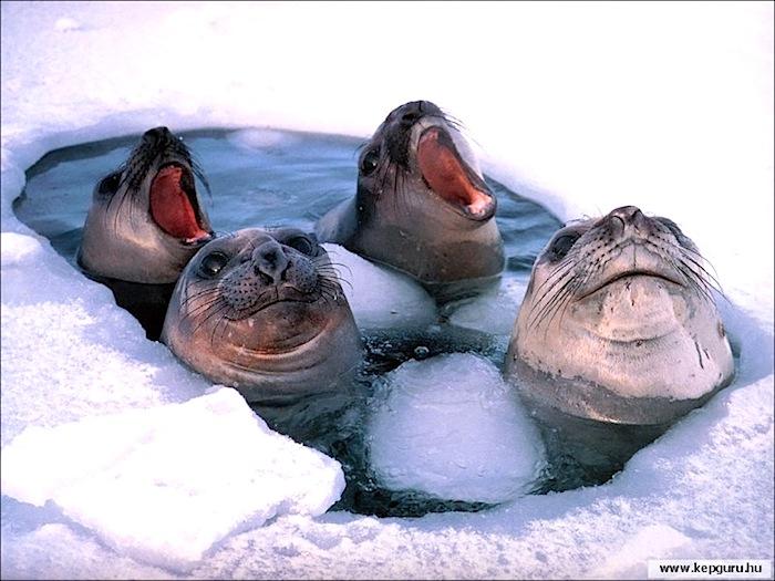 Wondermore Antarctica 11.jpg