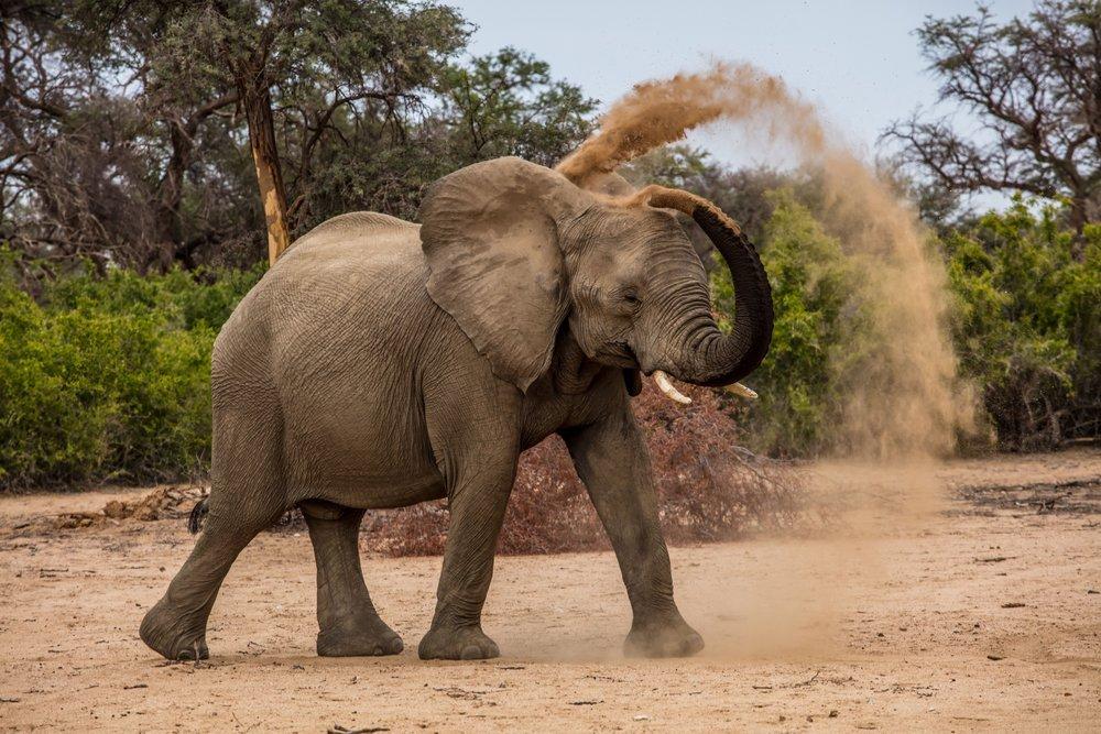 namibia elefante.jpg