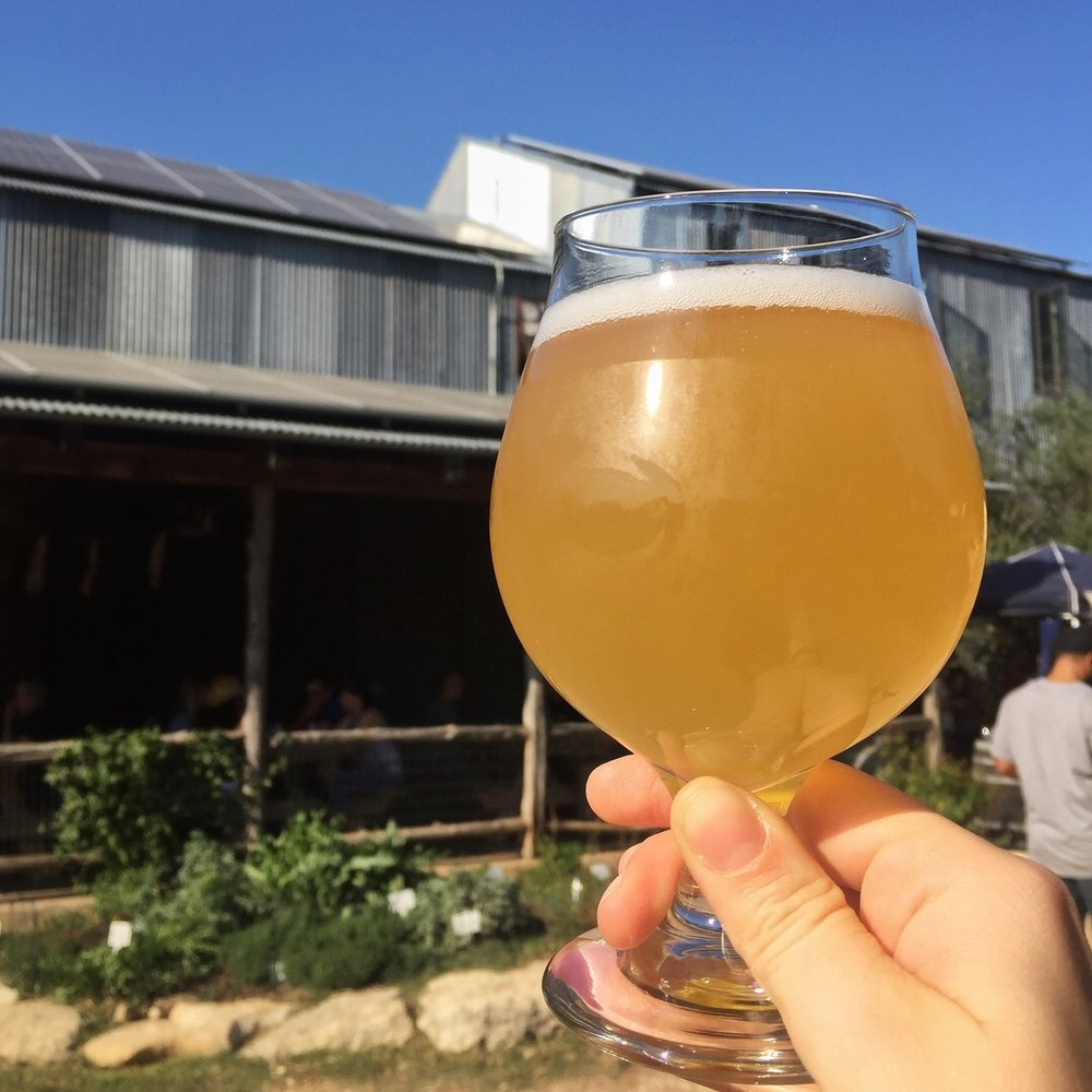 jester-king-glass-beer.jpg