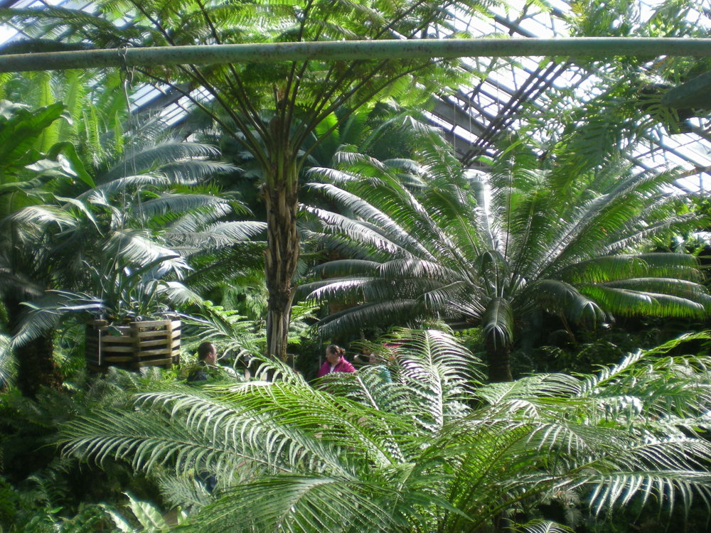 Lincoln Park Conservatory Fern Room